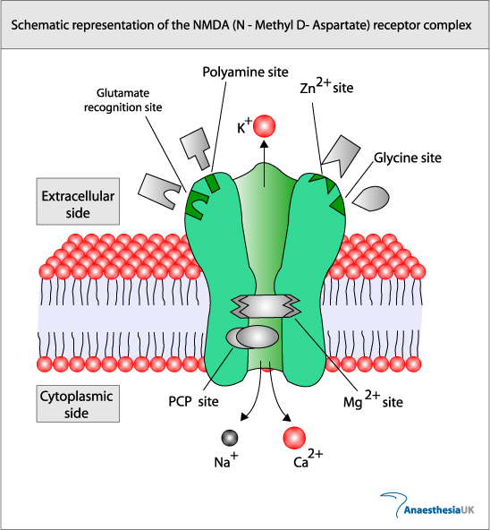 Anaesthesia UK : NMDA receptor